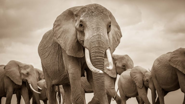 """""""The most powerful weapon is showing locals that conservation makes financial sense,"""" says Kenya-based conservation scientist Jeremy Goss. """"With elephants, we have a tourism industry that benefits us all."""""""