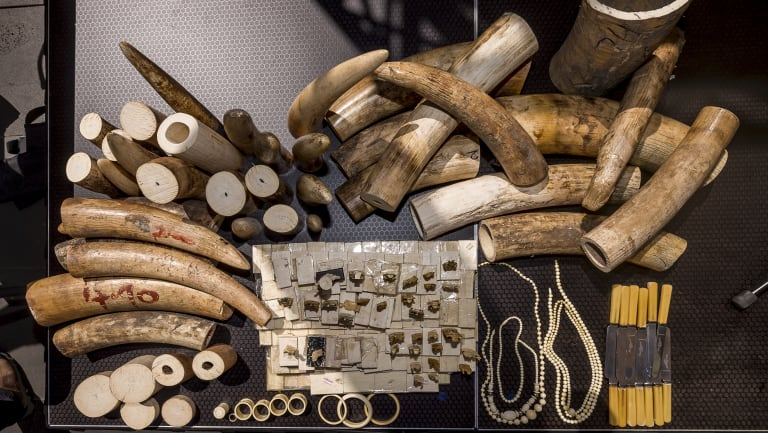 Intricate ivory figurines, bracelets and other items were turned into powder at an ivory destruction event in Melbourne.