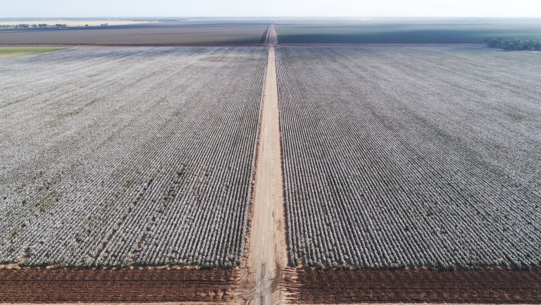 Irrigators, such as cotton growers, are cheering the changes to Murray-Darling Basin Plan.