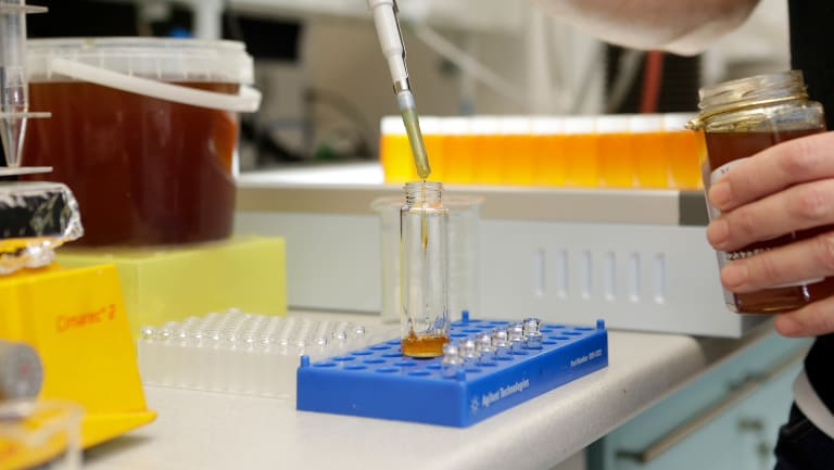 WA honey undergoing testing before it gets accredited and sent overseas.