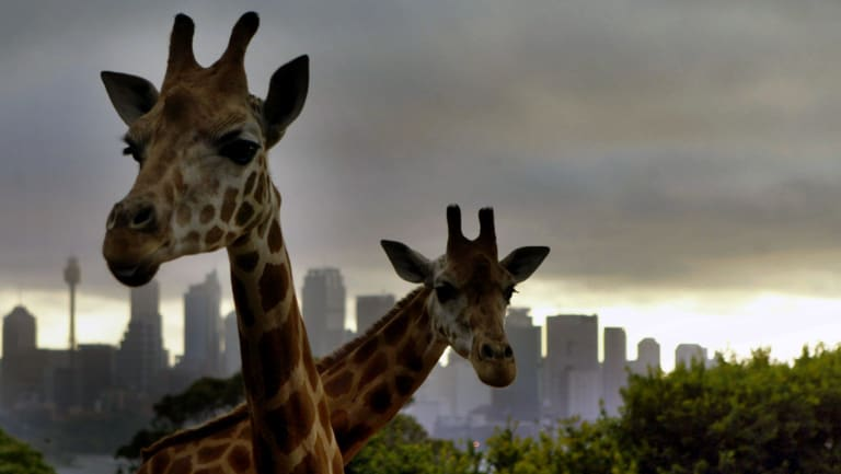 """Not in central Sydney"": Taronga Zoo wants to stop its rival calling itself Sydney Zoo."