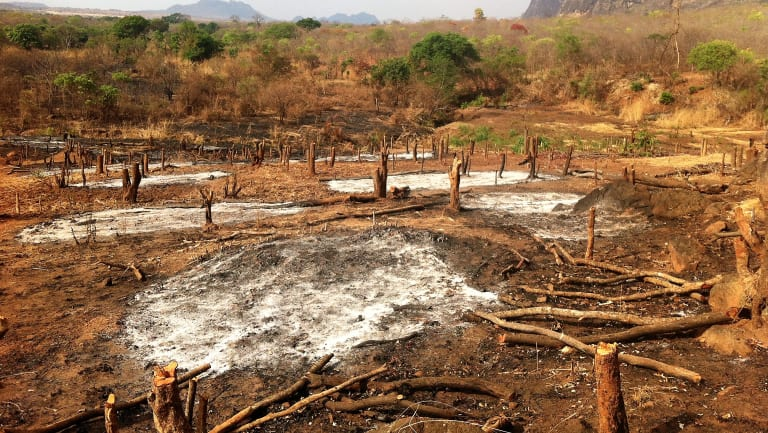 Threats from expanding slash and burn agriculture are placing pressure on many national parks around the world, even the better managed ones such as Niassa Reserve in Mozambique.
