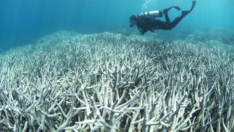 Coral bleaching at the Great Barrier Reef killed about half the corals over two hot summers in 2015-16 and 2016-17.
