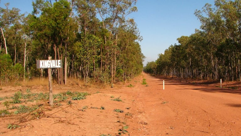 Forest at the Kingvale Station, where more than 1800 hectares is set to be cleared. Photo courtesy Australian Conservation Foundation.