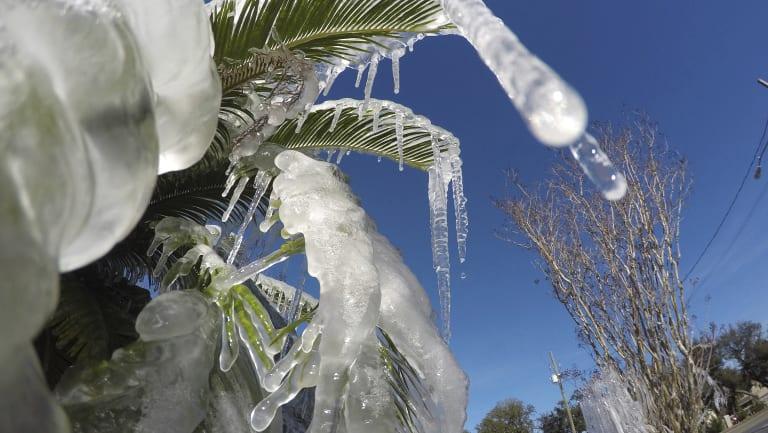 Water is frozen on a tree in Fort Walton Beach, Florida.