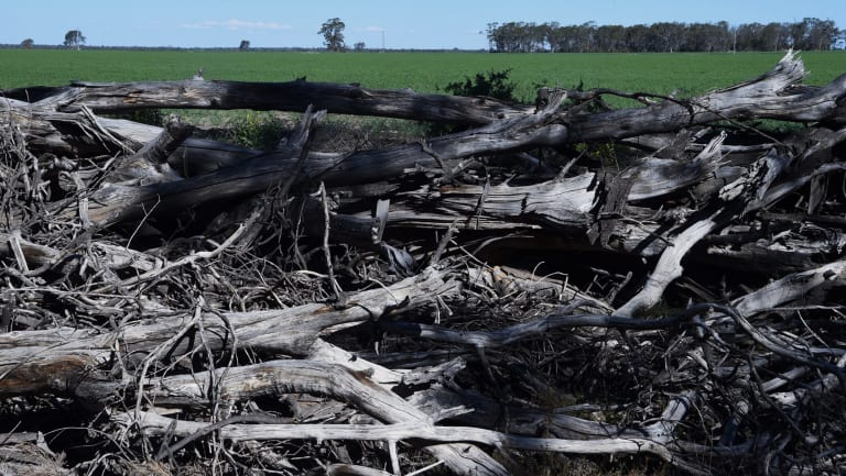 Land clearing near Croppa Creek, near where government compliance officer Glenn Turner was shot dead by farmer Ian Turnbull in 2014.