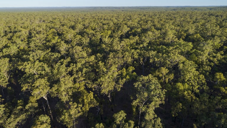 Old growth forest in the vicinity of Kingvale Station, near rivers that flow into the Great Barrier Reef. Photo courtesy Australian Conservation Foundation.