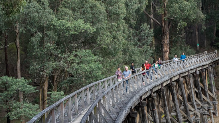 Logging was due to start around Noojee on Thursday.