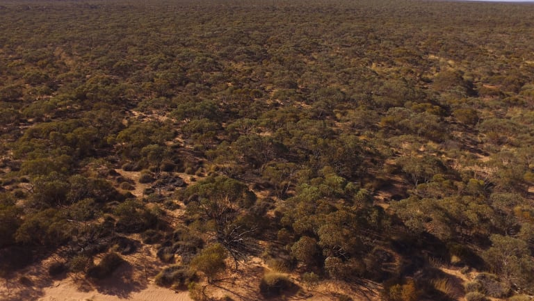 The plateau area in the Murray-Sunset National Park.