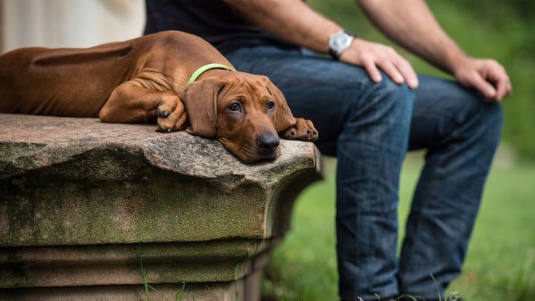 Clark Butler and his dog Wilbur at an off leash park in Paddington.