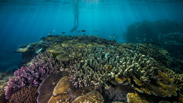 The government's own experts warned the land clearing proposal may damage the Great Barrier Reef.
