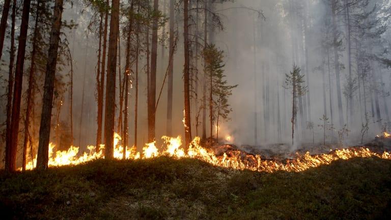 A wildfire burns in Karbole, outside Ljusdal, Sweden, on Sunday.