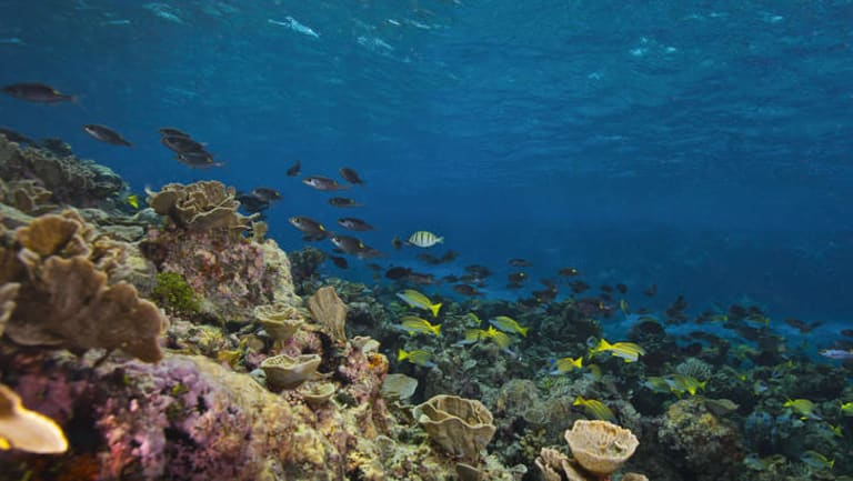 Environmentalists fear the Adani mine will worsen climate change and damage the Great Barrier Reef