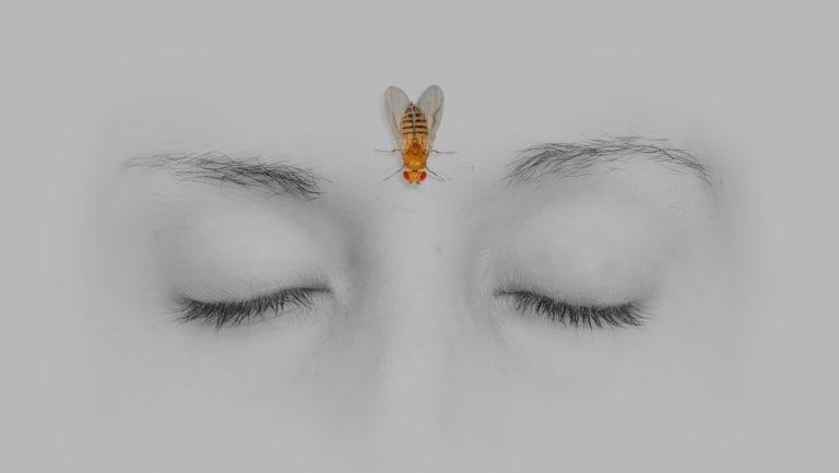 Humans' huge brains need sleep. Flies' tiny brains need even more. Why?