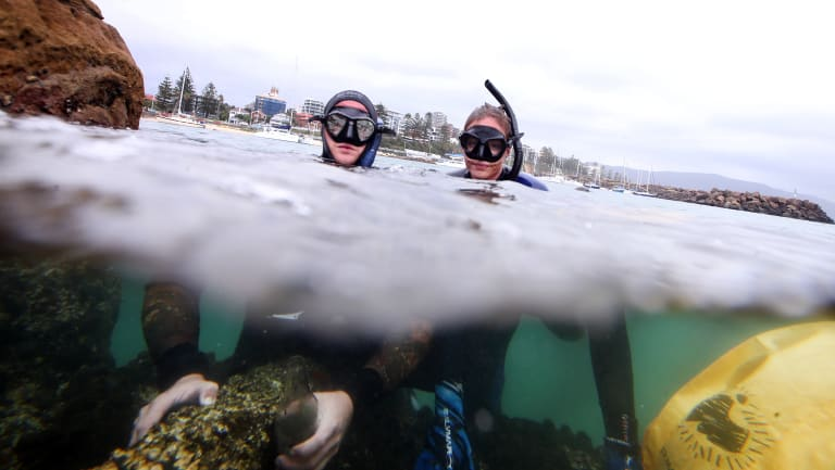 Snorkellers help to clear rubbish off the shores of North Wollongong beach.