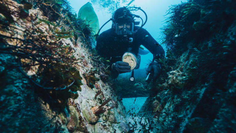 Brad Adams, chief executive of Ocean Grown Abalone, diving for abalone.