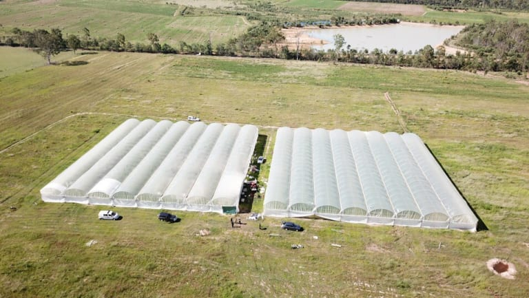 Police seized thousands of cannabis plants from properties near Esk.