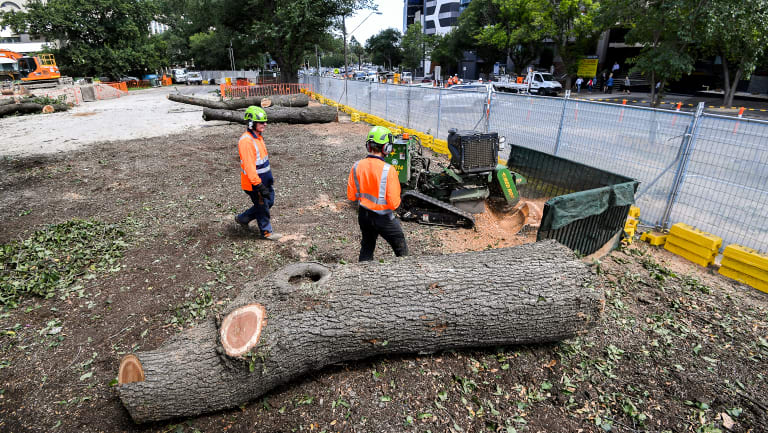 Tree felling works begin on the corner of Albert and St Kilda Roads on Wednesday.