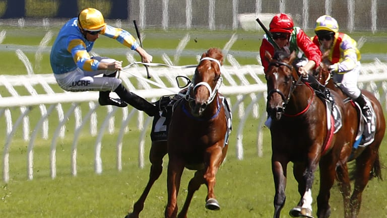 Fall guy: Hugh Bowman is sent flying from Performer as he veers out in the Todman Stakes at Randwick on Saturday.
