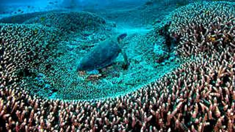 Adani opponents say the mine will add to global warming and worsen coral bleaching on the Great Barrier Reef.
