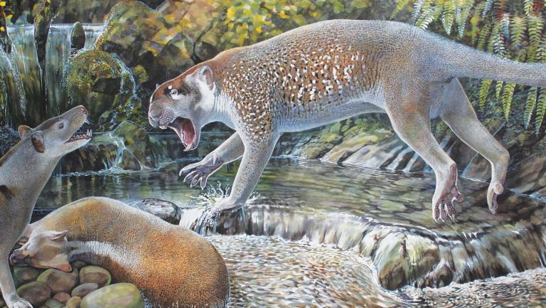 Marsupial lion Wakaleo schouteni.