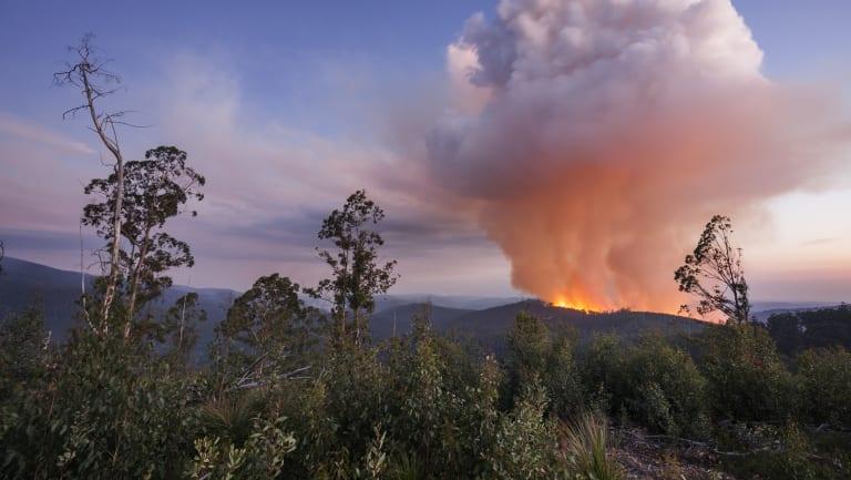 A clearfell logging fire near Mount Baw Baw on April 21.