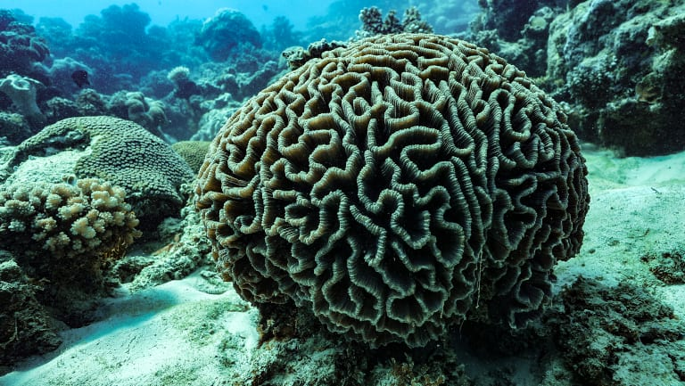 Great Barrier Reef tour operators are shifting their stance on climate change, and the threat it poses for corals in Australia and around the world.