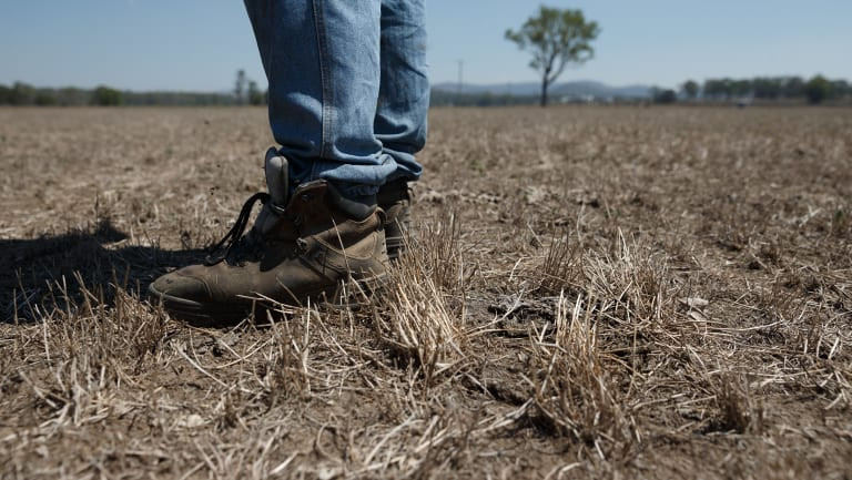 Jamie Marquet, a dairy farmer from Wallarobba, stands in one of this dried-out paddocks. NSW posted its driest January-June period since 1986, according to the Bureau of Meteorology.