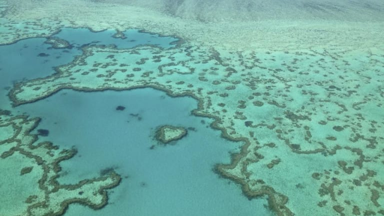 Flight Centre cofounder Graham Turner said the sensitive Great Barrier Reef needed protecting.