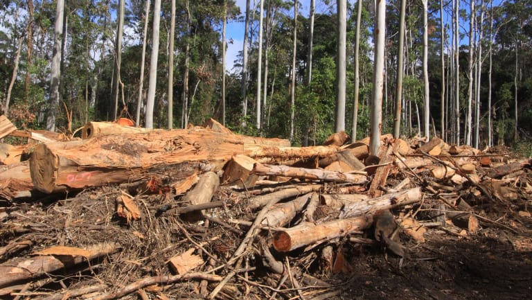 Forestry in state forests has been loss-making, and environmental groups have long called for it to end.