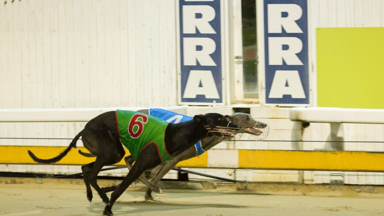 Greyhound racing is now illegal in Canberra.