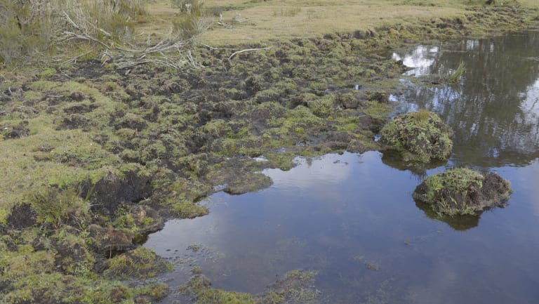 Damage to water courses from wild horse within the Kosciuszko National Park.