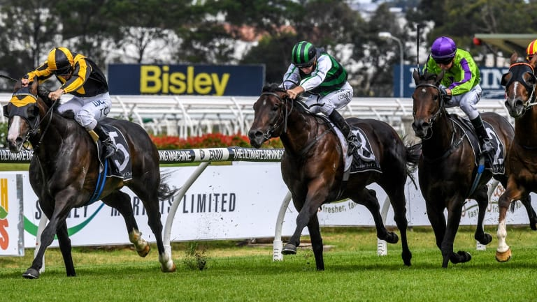 In the limelight: Trapeze Artist was the stand-out performer for his champion sire Snitzel during the season.