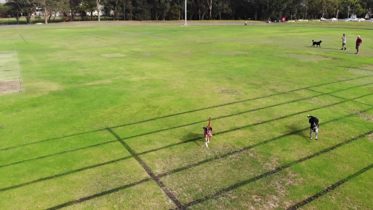 Some dogs at the park became extremely interested in the drone.