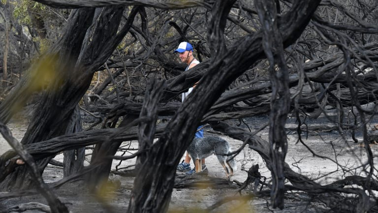 A Cheltenham resident inspects the damage after fire threatened homes on Wednesday.