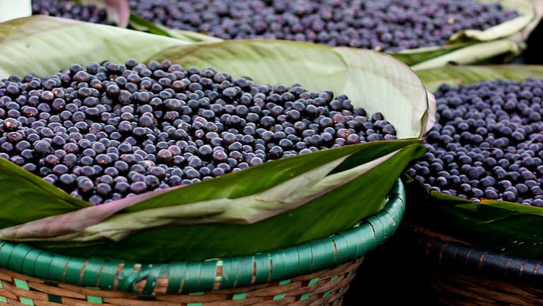 Baskets of Acai berries in the Acai Market in Brazil.