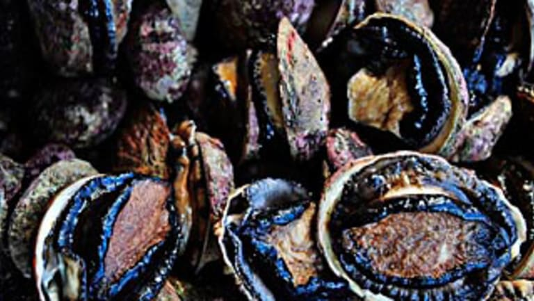 Abalone retails for around $100 a kilo.