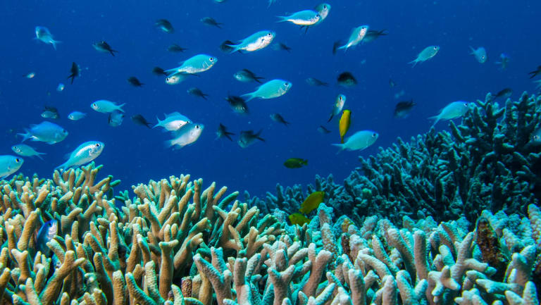 Doubts have been raised over the Great Barrier Reef Foundation's ability to raise money to improve the health of the natural wonder.