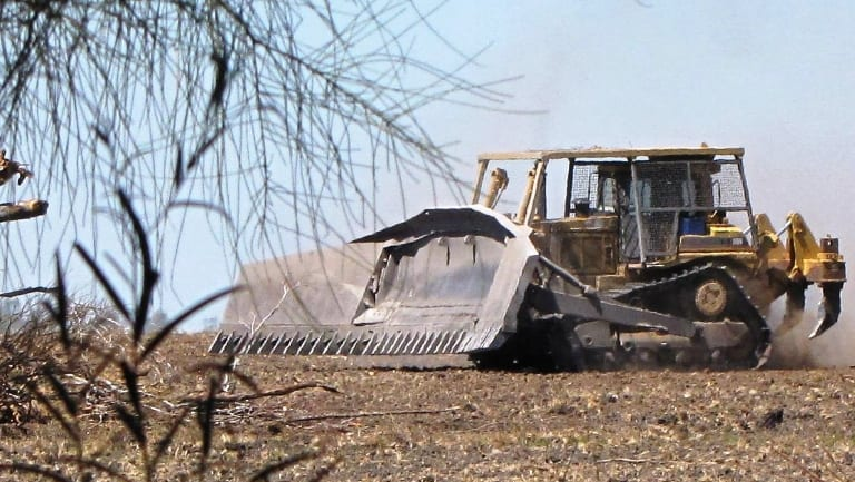 The Queensland Conservation Council says vegetation management laws should be introduced as a priority.