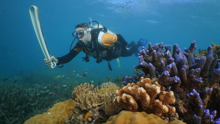 The government is reducing the highest level of protections in the Coral Sea, near the Great Barrier Reef.