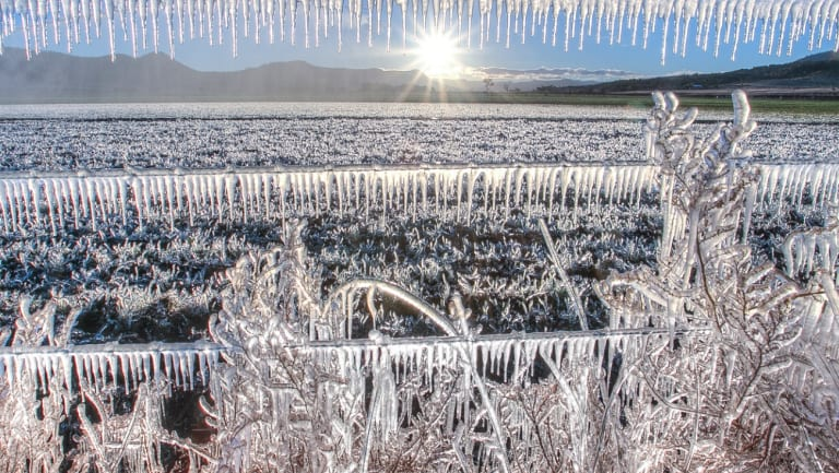 Frozen dairy farm fields created a stunning sight near Warwick in Queensland's Southern Downs on June 18. (File Image)