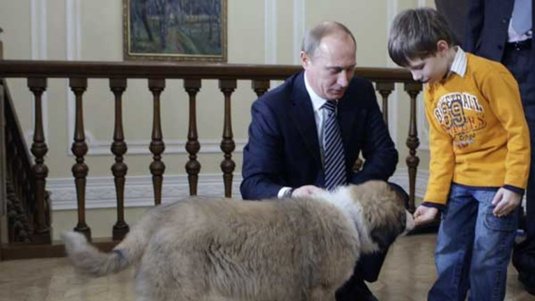 Meet Buffy Slayer Of Vlad S Heart The New Pup To Be Putin Pampered