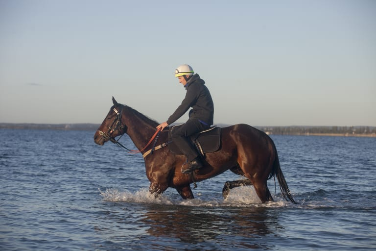 Easy does it: Ben Cadden and Winx have a paddle at Mascot.
