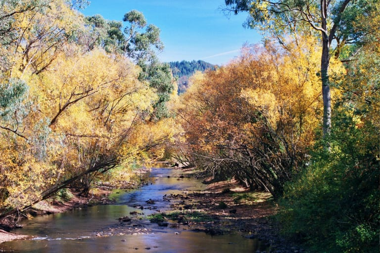Ovens River, Bright.
