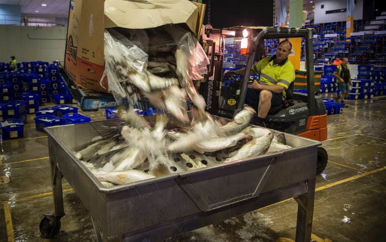 More than 90 per cent of seafood sold at the Sydney Fish Market arrives by truck.