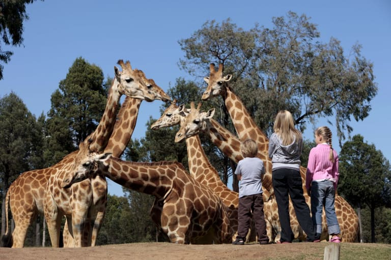Dubbo is famous for its Taronga Western Plains Zoo.