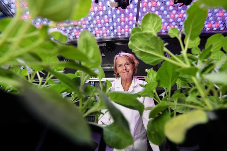 The botanist: Professor Marilyn Anderson with her nicotiana benthamiana, a native tobacco plant.