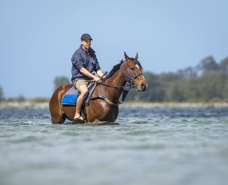 Canberra trainer Matthew Dale is buoyant about Fell Swoop's upcoming spring campaign.