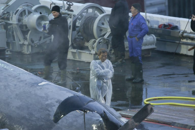 A Japanese inspector and crew  members take pictures of the whale.