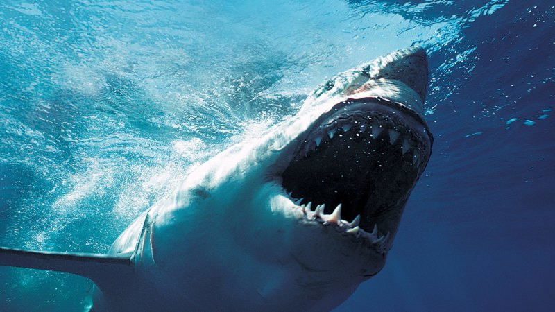 5500 sharks lurk in the waters off eastern Australia, new